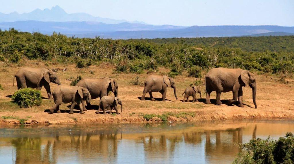 Elefanten in der Wildnis von Südafrika