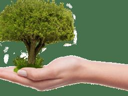 Baumbeflanzung