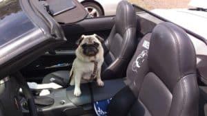 Hund im Mietwagen